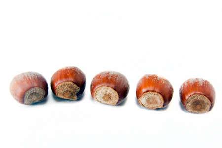 cobnut: Five hazelnuts closeup isolated on white background Stock Photo