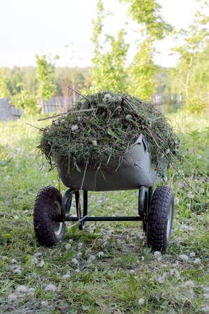 cut grass: Garden wheelbarrow with cut grass Stock Photo