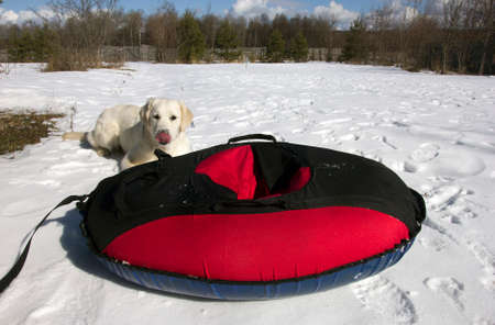 tubing: red and black material snow inner tubing (toobing) on the white snow and dog behind it Stock Photo