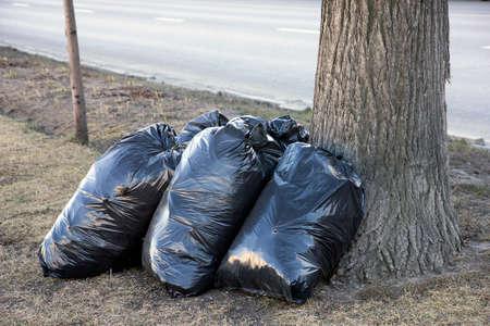hojas secas: la calle del resorte de limpieza - garbarge bolsas negras con hojas secas cerca de árbol en el césped a lo largo de calle de la ciudad, Moscú, Rusia