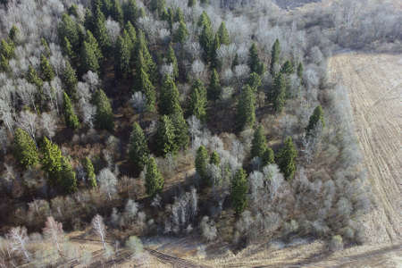 birds eye: views of field and fir forest from the birds eye view from a hot air balloon
