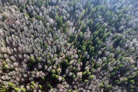 birds eye: views of field and fir forest and trees from the birds eye view from a hot air balloon Stock Photo
