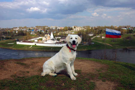 other side of: beautiful panoramic view from hill to old ancient orthodox white monastery on the other side of river and russian state flag on the hill and dog golden retriever in foregroung