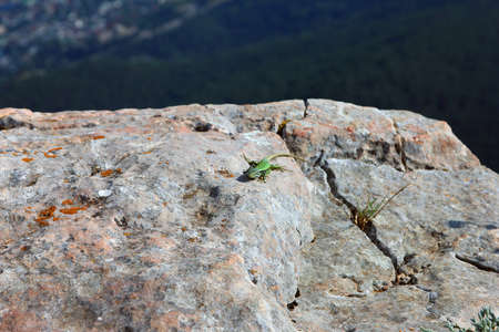 green lizard on white rocks on mountain peak Ai-Petri in Crimea in summer
