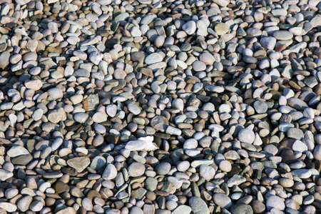 big slick: texture of beautiful dry round colored sea pebbles on pebble beach foreground closeup