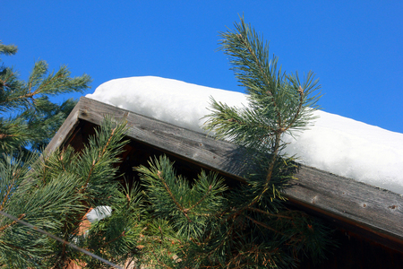 pine branches with long green needles on background of snow-covered pitched roof and clear blue sky Stock Photo