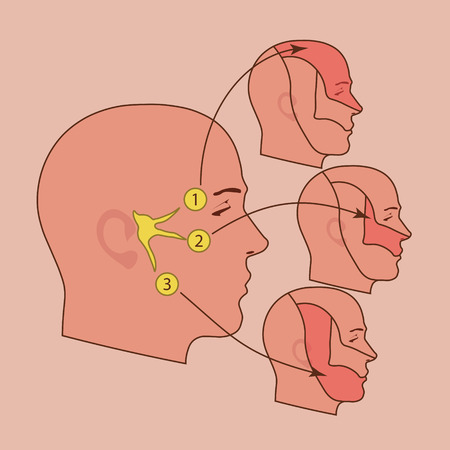 facial care: The trigeminal nerve