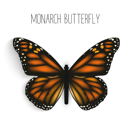 north american butterflies: Monarch butterfly isolated realistic. Illustration