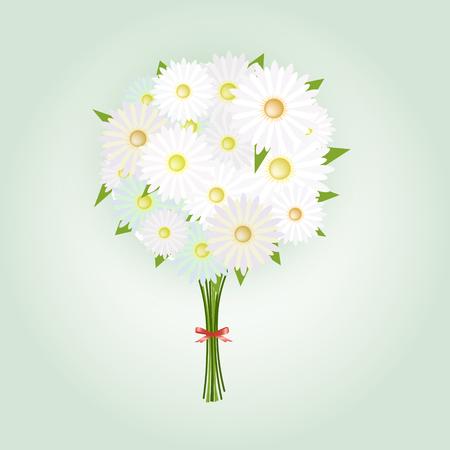 marguerite: Camomille Fleur ou Blanc Daisy Daisy Bouquet Illustration