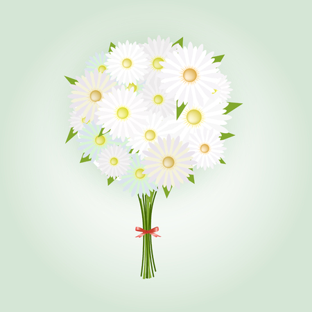 chamomile flower: Chamomile Flower or White Daisy Daisy Bouquet