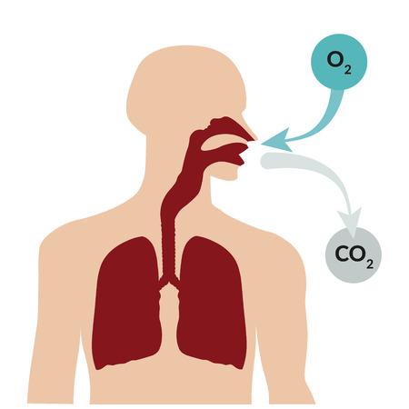 Respirar por la nariz y exhalando por la boca. Sistema respiratorio Foto de archivo - 49754929