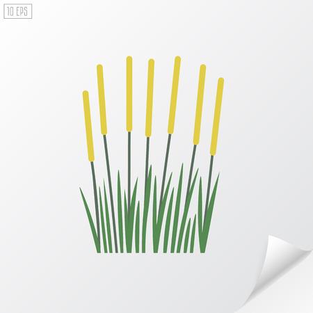 rushy: Reeds on white background.