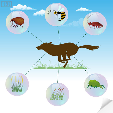 Infographics dangerous insects and plants that cause allergic reactions for pets.