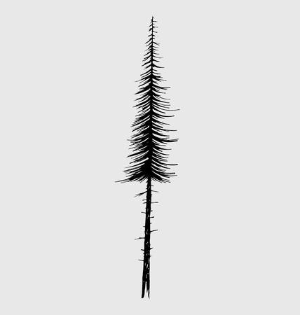 tall tree: Tall fir tree, nature design element.
