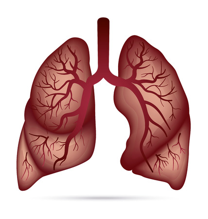 lung cancer: Human lungs anatomy for asthma, tuberculosis, pneumonia. Lung cancer diagram in detail illustration. Breathing or respiratory system. Vector.