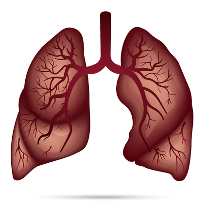 Human Lungs Anatomy For Asthma, Tuberculosis, Pneumonia. Lung ...