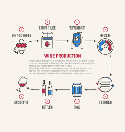 Thin line infographic of wine fermentation, making. How wine is made, wine elements, creating a wine, winemaker tool set and vineyard. Production of alcoholic beverages. Vector illustration. Illustration