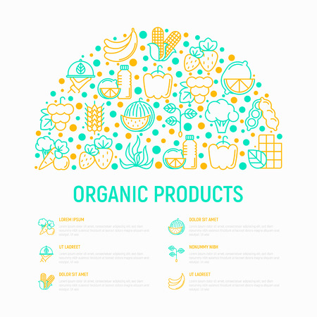 Organic products concept in half circle with thin line icons set: corn, peas, raw cafe, broccoli, grapes, sprouts, seaweed, watermelon. strawberry. Modern vector illustration for vegetable shop.