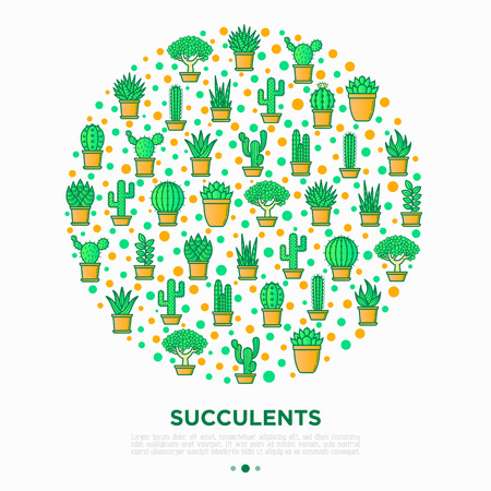 Cactus and succelents in pots concept in circle with thin line icons. Modern vector illustration, web page template for shop of plants.