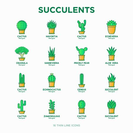 Set of cactus and succelents in pots. Thin line icons. Modern vector illustration of plants for house decoration.