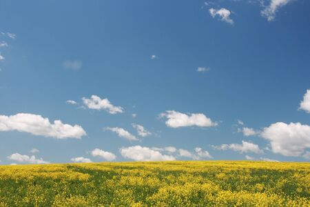 Yellow field and blue sky  Germany