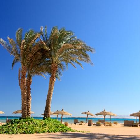 cielo azul, palmeras y sombrillas en la playa