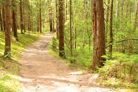 Winding path through lush foliage