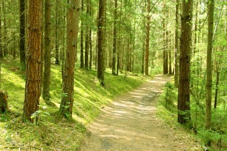 Финляндия: Извилистый путь через густые Финляндии листвы