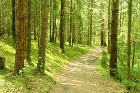 Winding path through lush foliage  Finland  Stockfoto