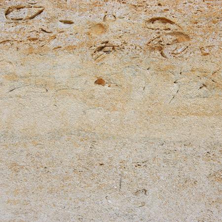 coquina: Textura Coquina. Pared vieja con el modelo natural.
