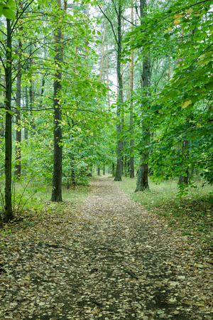 covert: Footpath in wild forest, covert. Nature, trees in forest.