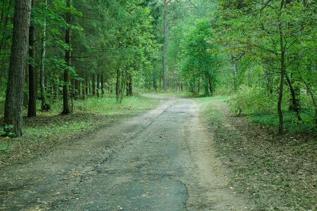 covert: Country road in wild forest, covert. Nature, trees in forest.