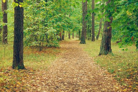 covert: Country road in autumn forest, covert. Nature, trees in forest.