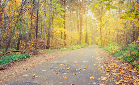 covert: Country road in autumn forest, covert. Finland. Nature, trees in autunm forest. Stock Photo