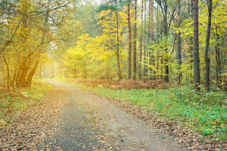 covert: Pathway through the beautiful autumn forest. Autumn forest, covert. Tinted photo.