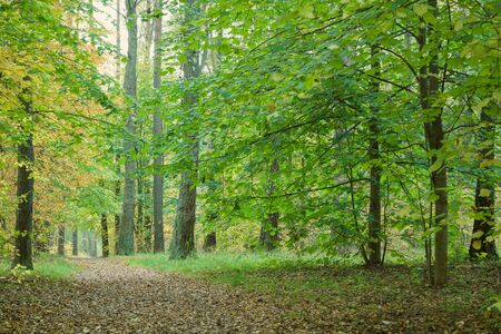 covert: Pathway through beautiful autumn forest. Autumn forest, covert. Tinted photo.