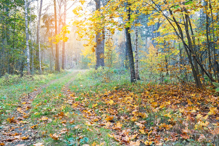 covert: Beautiful autumn forest. Pathway through the autumn forest, covert.