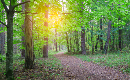 Country road in beautifull wild forest, covert. Nature, trees in forest.  Stockfoto