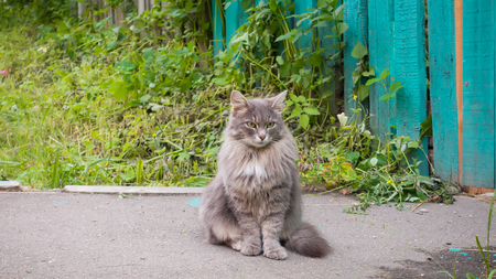 Beautiful emotional cat sits on a country road and looks.