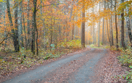 Beautiful autumn forest with vibrant colourful leaves. Road through the autumn forest. Stock Photo