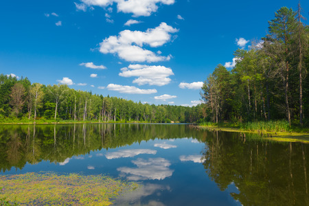 Beautiful forest lake and blue sky at sunny day