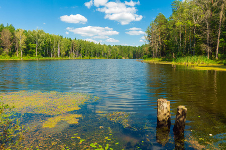Beautiful lake in forest at sunny day.