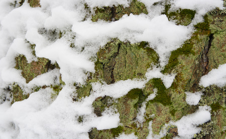Tree trunk with fresh snow. Winter background, tree with snow.