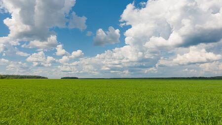 Beautiful landscape, sky and green fresh grass. Grass and sky at beautiful day