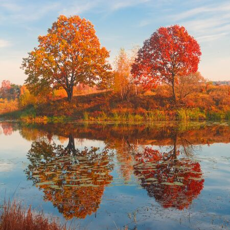 Amazing autumn landscape, forest lake with reflection. Three trees like mother, father and child.