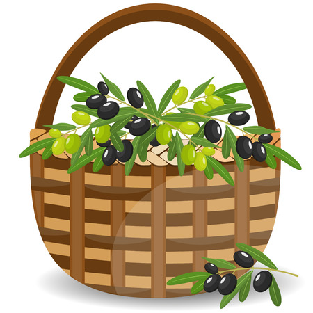 Basket with green and black olives isolated on white. Vector illustration.