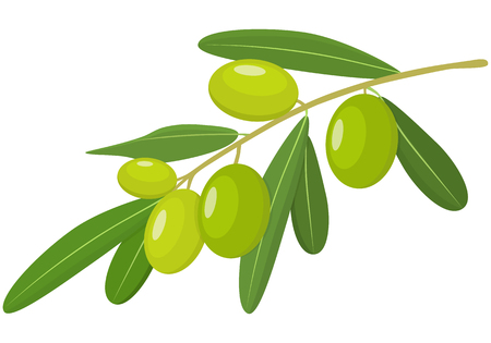 Vector Green Olives Branch with Leaves Isolated on White Background. Label of green olives with realistic olive branch. Vector illustration. Healthy vegetables and vegetarian food. Fresh organic food, healthy eating .