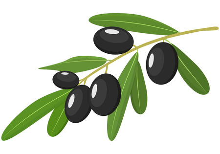 Vector black Olives Branch with Leaves Isolated on White Background. Label of black olives with realistic olive branch. Vector illustration. Healthy vegetables and vegetarian food. Fresh organic food, healthy eating . Illustration
