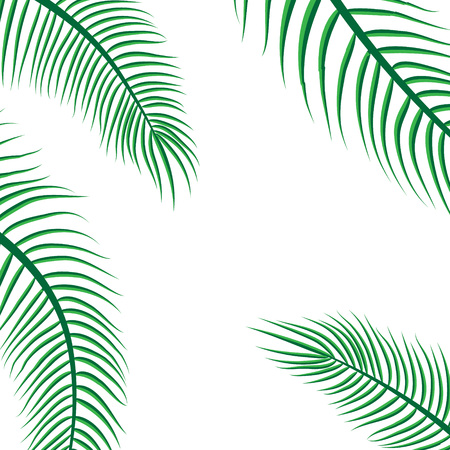 Green coconut leaf frame isolated on white background