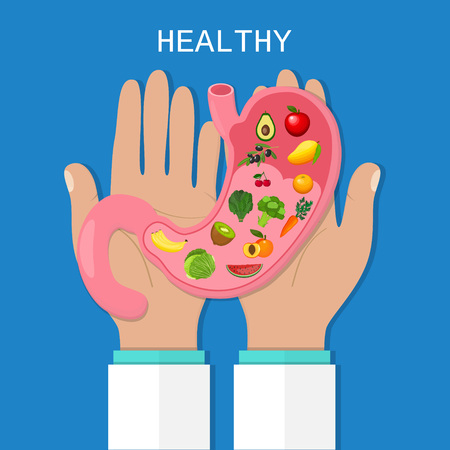 digesting: Stomach icon. Human internal organs. Healthy food. Digestion. Digestive tract, system. Healthcare. Flat style. Vector illustration